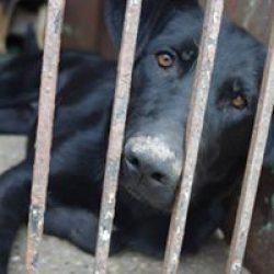 Állatokat Védjük Együtt Alapítvány Egri Menhely